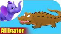 Alligator – Animal Rhymes in Ultra HD (4K)