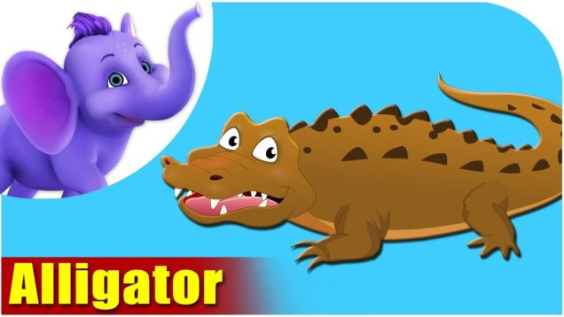 Alligator – Animal Rhymes in Ultra HD (4K)