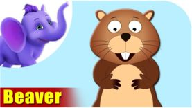 Beaver – Animal Rhymes in Ultra HD (4K)