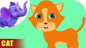 Cat Rhymes, Cat Animal Rhymes Videos for Children