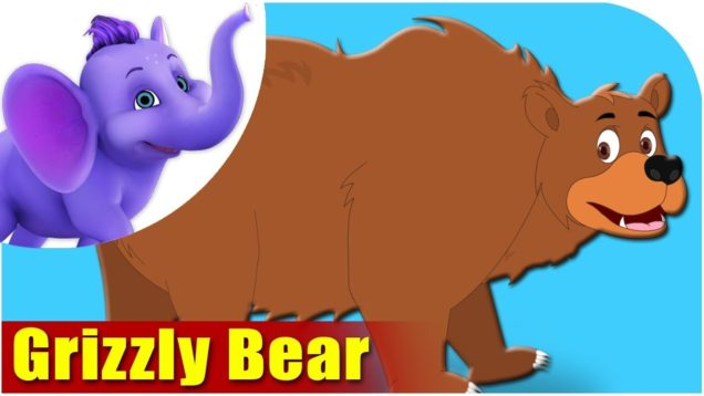Grizzly Bear – Animal Rhymes in Ultra HD (4K)