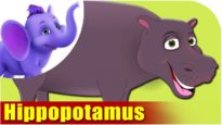 Hippopotamus – Animal Rhymes in Ultra HD (4K)