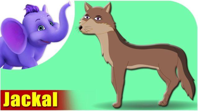 Jackal – Animal Rhymes in Ultra HD (4K)