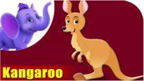 Kangaroo – Animal Rhymes in Ultra HD (4K)