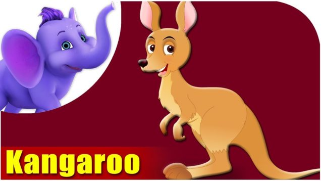 Kangaroo – Animal Rhymes in Ultra HD (4K)
