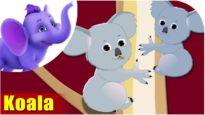 Koala – Animal Rhymes in Ultra HD (4K)