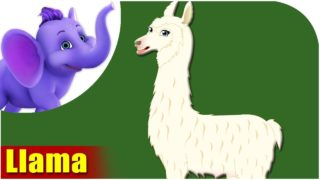 Llama – Animal Rhymes in Ultra HD (4K)