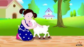 Mary had a Little Lamb in Bengali – Nursery Rhyme