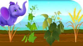 Oat, Peas, Beans and Barley – Nursery Rhyme with Karaoke