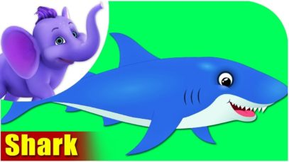 Shark – Animal Rhymes in Ultra HD (4K)