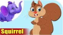 Squirrel – Animal Rhymes in Ultra HD (4K)