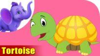 Tortoise Rhymes