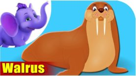 Walrus – Animal Rhymes in Ultra HD (4K)