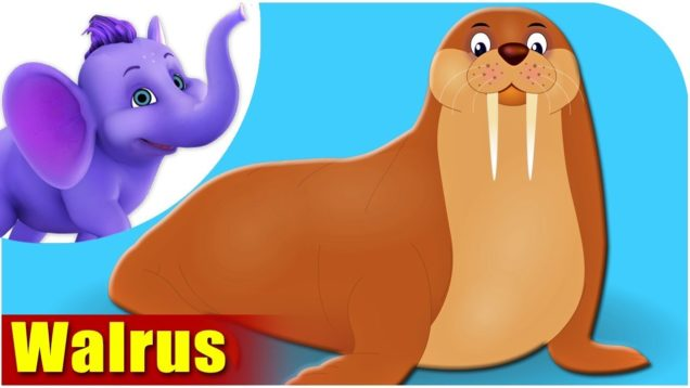 Walrus – Animal Rhymes in Ultra HD (4K)