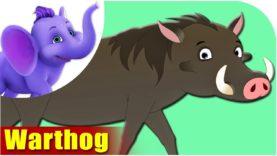 Warthog – Animal Rhymes in Ultra HD (4K)