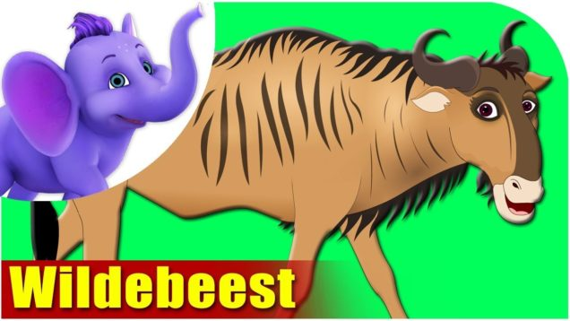 Wildebeest – Animal Rhymes in Ultra HD (4K)