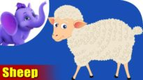 Bhed (Sheep) Animal Rhymes | Hindi Rhymes from Appuseries