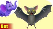 Chamgaadad (Bat) Animal Rhymes | Hindi Rhymes from Appuseries