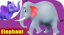 Hatti (Elephant) – Animal Rhymes in Marathi