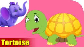 Kasava (Tortoise) – Animal Rhymes in Marathi