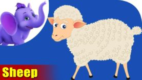 Mendhi (Sheep) Animal Rhyme | Marathi Rhymes from Appuseries
