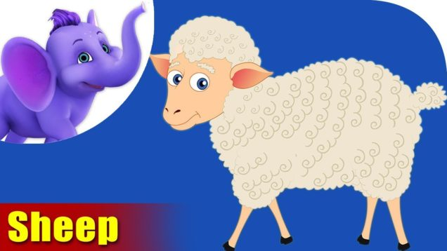 Mendhi (Sheep) Animal Rhyme | Marathi Rhymes from Appuseries