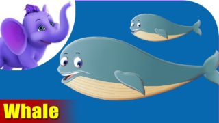 Whale Animal Rhyme | Marathi Rhymes from Appuseries