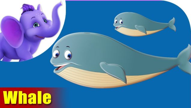 Whale Animal Rhymes | Hindi Rhymes from Appuseries