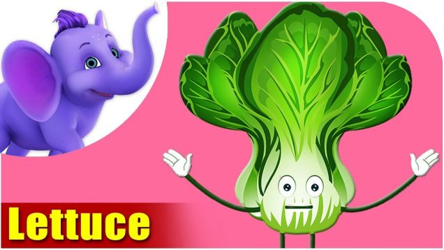 Lettuce – Vegetable Rhymes in Marathi