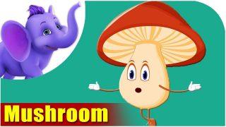 Mashroom (Mushroom) – Vegetable Rhymes in Marathi