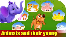 Animals and their Young Ones – Learning song for Children in 4K by Appu Series