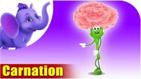 Carnation – The Flower Song (4K)