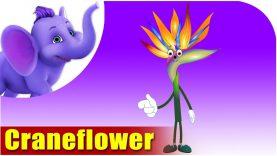 Crane Flower – The Flower Song (4K)