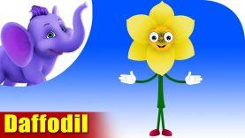 Daffodil – The Flower Song (4K)