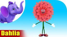 Dahlia – The Flower Song (4K)