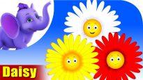 Daisy – The Flower Song (4K)