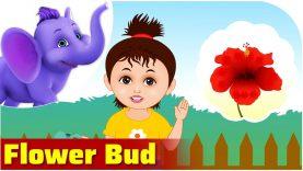 Flower Bud in Ultra HD (4K)