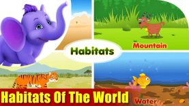 Habitats of the World in Ultra HD (4K)