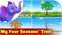 My Four Seasons Tree in Ultra HD (4K)