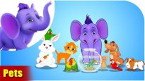 Pets – Learning song for Kids in 4K by Appu Series