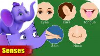 Senses – Learning song for Children in 4K by Appu Series