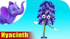 Hyacinth – The Flower Song (4K)
