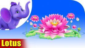 Lotus – The Flower Song (4K)