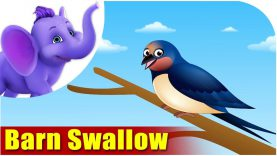 Barn Swallow – Bird Song (4K)