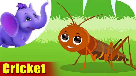 Cricket – A Bug Song (4K)