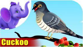 Cuckoo – Bird Song (4K)