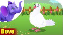 Dove – Bird Song (4K)