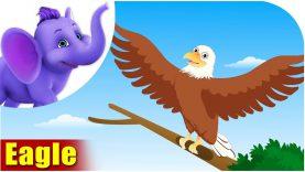 Eagle – Bird Song (4K)