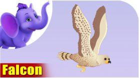 Falcon – Bird Song (4K)