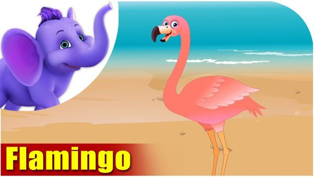 Flamingo – Bird Song (4K)